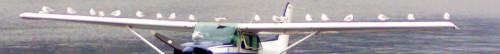 Aero-Club-Como-Carnabuci-gulls