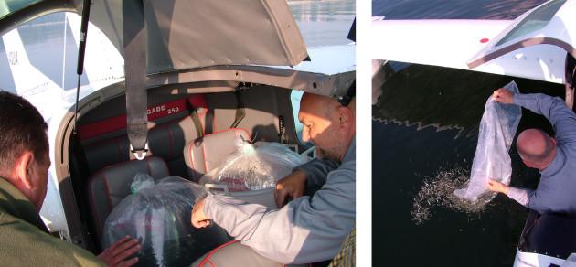Contenitori di lavarelli a bordo degli idrovolanti dell'Aero Club per ripopolare il lago